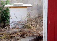 How To Move Your Beehive (more than 2 feet, but less than a mile). Place branches to obstruct entrance in new location, causing the bees to reorient themselves.