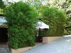 Bambus als Sichtschutz für die Gastronomie kaufen | Bambusbörse
