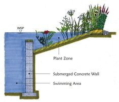 For when we build our pond pool Cory. Natural Pools NZ, Eco-friendly natural swimming pools free of chemicals, naturally filtered Natural Swimming Ponds, Natural Pond, Swimming Pool Pond, Interior Tropical, Interior Garden, Interior Design, Design Interiors, Design Design, Landscape Design