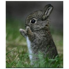Cute Baby Animals ❤ liked on Polyvore featuring animals, backgrounds, bunny, cute and pictures