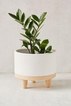 planter cuteness