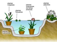 As plantas para lagos, quanto aos tipos, podem ser divididas em flutuantes, submersas, submersas com folhas emersas, palustres, marginais e anfíbias. Todas elas contribuem bastante para que a água do lago não se torne muito esverdeada.