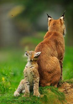http://ift.tt/1K6283m #animals abgelenkt by RobertGoppelt http://ift.tt/20qUftv