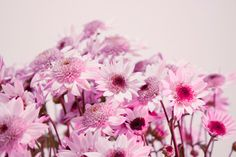 Flower Photography by Ana Pontes.