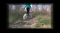 Brisk Dog Walk in the Fresh Air Online Pet Supplies, Dog Supplies, Online Pet Store, Dog Walking, Dog Toys, Dog Cat, Puppies, Pets, Animals