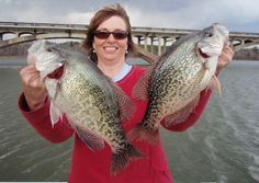 Crappie fishing tips and techniques catching help and learning how to fish using rod reel hook and line for crappie specks.