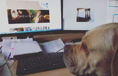 Egy képzöművész-restauràtor hölgynek készül a weboldala ahol sok szép referencia munkája látható lesz. Ezért is esett a választás arra hogy portfólió oldal készüljön. Alba is nyomon követi a fejleményeket minden nap egyszer ránéz  . . . Nap, Minden, Business, Dogs, Animals, Animales, Animaux, Pet Dogs, Doggies