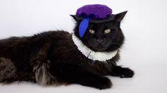 Renaissance cat costume halloween costume