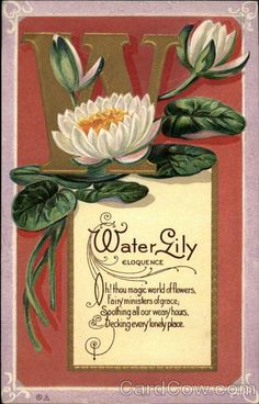 W for Water Lily (Eloquence) Motto series 8 Oh! thou magic world of flowers Fairy ministers of grace; Soothing all our weary hours, Decking every lonely place