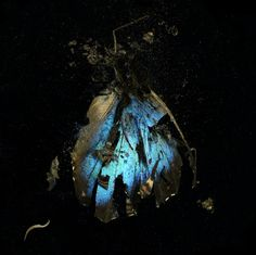 Mat Collishaw - Insecticide