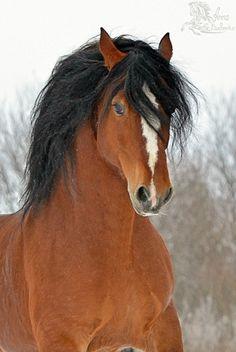 Gallery.ru / Фото #144 - Free Horse - anna-babenko