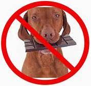 Familia Basset Hound: Por que o chocolate faz mal ao cachorro.