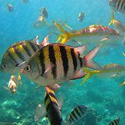 Curacao Tropical Fish