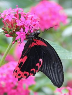 Pretty in pink butterfly