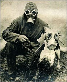 vintage everyday: Against Threat of Chemical Warfare – Vintage Photos Show Dogs Wearing Gas Masks during the Wars Gas Mask Art, Masks Art, Gas Masks, Chernobyl, Plague Mask, Plakat Design, Psy Art, Military Dogs, War Dogs
