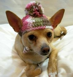 Dog hat crocheted Pink camouflage Xsmall or Small. $12.00,