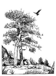 Raven Landing by outsidelogic on deviantART