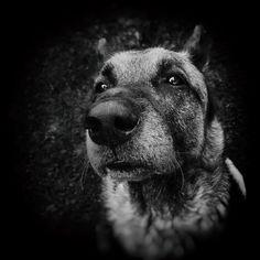 Boże, pomóż mi być takim człowiekiem, za jakiego bierze mnie mój pies.   Janusz Leon Wiśniewski