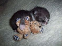 Then & Now: Kitten and her Teddy Bear