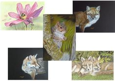 British Wildlife, Christmas Gift Box, Pastel Paintings, Blank Cards, Paper Goods, Greeting Cards, Unique Jewelry, Handmade Gifts, Etsy Shop
