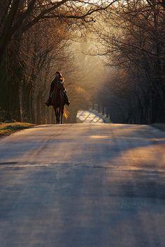 #sunset #sunrise #horses #horsebackriding #nature #scenic #photography