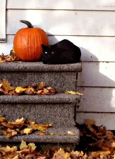 Classic signs of autumn...pumpkins and black cats
