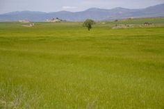 ZEPA de Bellmunt y Almenara (Lérida)