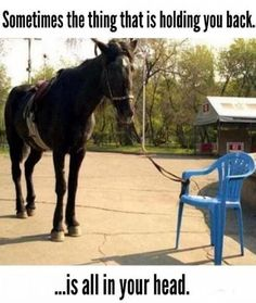 Funny Memes, Jokes, Humor and others Funny Horses, Funny Animals, Cute Animals, Funny Quotes, Funny Memes, Hilarious, Quotes Pics, Funny Horse Memes, Daily Quotes