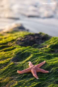 Nicest Things - Food, Interior, DIY: Starfish And Coffee: Urlaub in Nordfrankreich