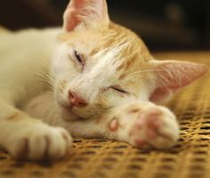 """""""Learn to Spot the Subtle Signs of Illness"""" Dr. Marty Becker says to watch for these not-so-obvious signs of illness in your pet."""