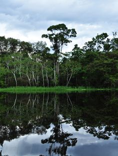 Amazon River in South America | Stunning Places #Places #South America #Amazon River