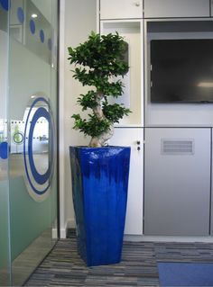 Office Plants Rented in Birmingham & Midlands Display, Office Plants, Trash Can, Small Desk, Office, Live Plants, Rent, Ficus, Meeting Room