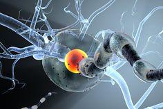 Нейробиологи научились лечить рассеянный склероз: Наука: Наука и техника: Lenta.ru