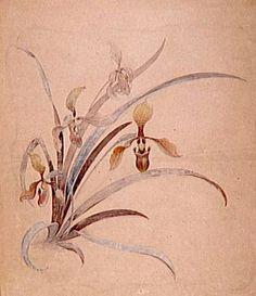 Emile Gallé - Dessins - Etude de Décoration Florale