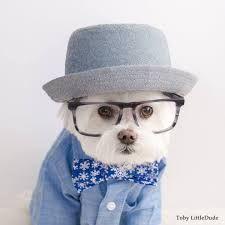 Image result for joyce chen toby maltese terrier
