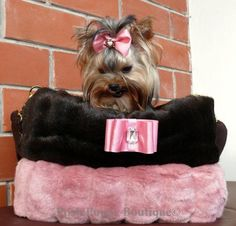 Couture Pet Carriers Keep Pets WARM and COZY.