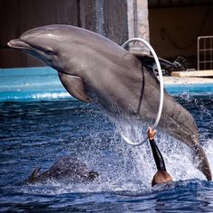 India recently became the fourth country to ban keeping dolphins in captivity. | Dolphins Are Basically Just People With Fins