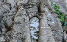 Buddha head trapped in the roots of a tree in Wat Na Phra Men temple, Ayutthaya, Thailand, Asia.