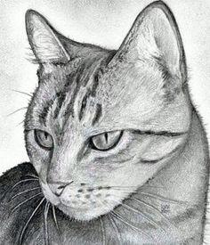 Как нарисовать реалистичную голову  кошки поэтапно