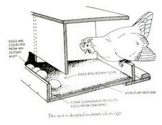pile of o'melays: chicken coop