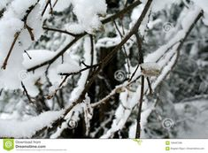Birch branches winter image. Photo about image, photo, melt, birch, nature, winter, sites, advertising, snow, background, which, covered - 106487286