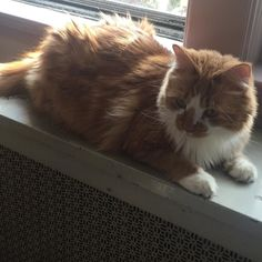 Good cookie Caturday Morning everypawdy Boots here Kevin warm in da window watchin da birdies me iz hoping for some more catio time like test wit da Meowmie her can't resist my meows.... How bout you what's you gots going on.... Wishin everypawdy a great cookie day  #meow #mainecoon #mainecoons #mainecoon_id #mainecooncat #mainecooncats #mainecoonsofinstagram #beautiful #beautifulcat #beautifulcats #buzzfeedanimals #beautifulcatsoninstagram #cat #cats #chat #caturday #catsoftheworld…