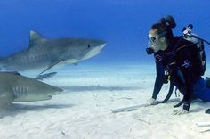 Why You Should Dive with Sharks! : Living Green Magazine