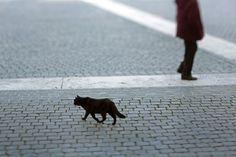 ローマの猫 画像集