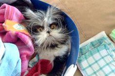 Meet Atchoum the Cat