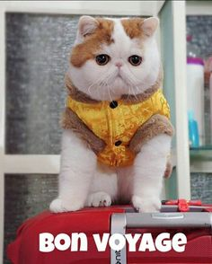 Holiday Time! #mondayblues #candycat #cat