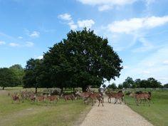 Rompiballe On The Road: Kew Gardens & Richmond #garden #park #flowers #plants #worldheritage #london #richmond #kewgardens #unitedkingdom #greatbritain #travel #trip #culture #londra #viaggi #elk #deer #animals #wildlife