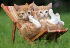 kittens relaxing