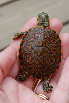 turtle small - Cerca con Google