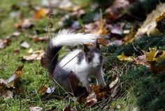 http://www.suomenluonto.fi/sisalto/kuvat/orava-erikoisessa-turkissa/